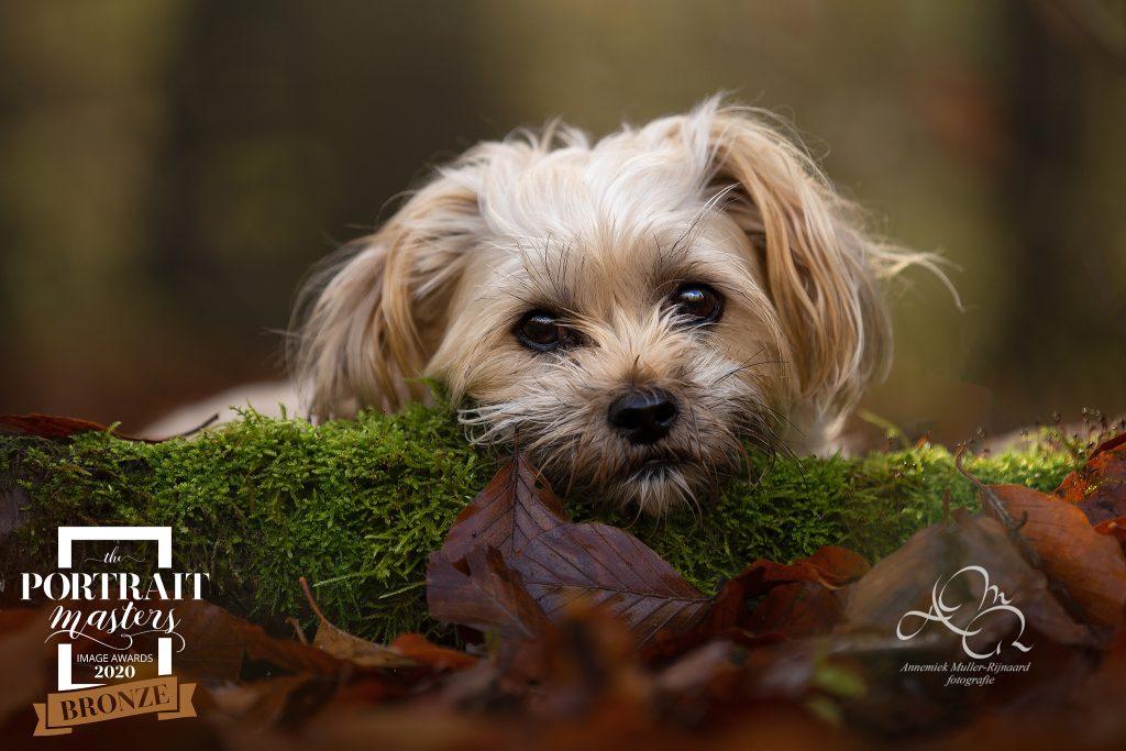 Hondenfotograaf